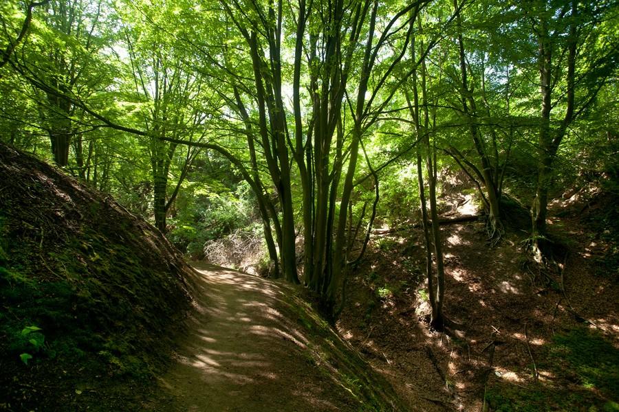 Lisi Jar - Jastrzębia Góra